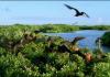 Adaları ile Vahşi Karayipler