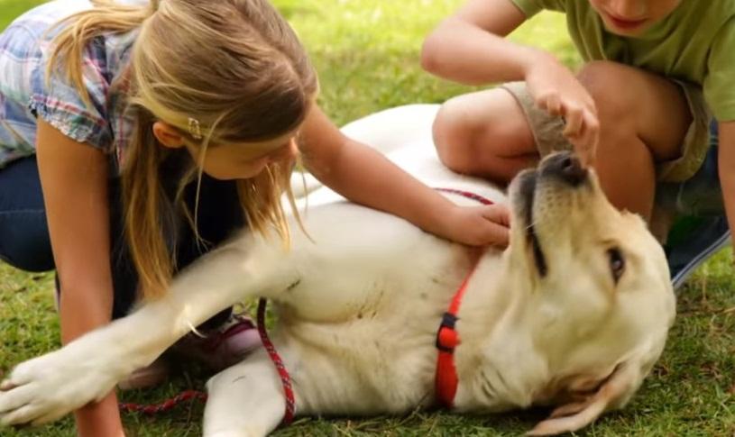 Köpeklerde Yalama Davranışları