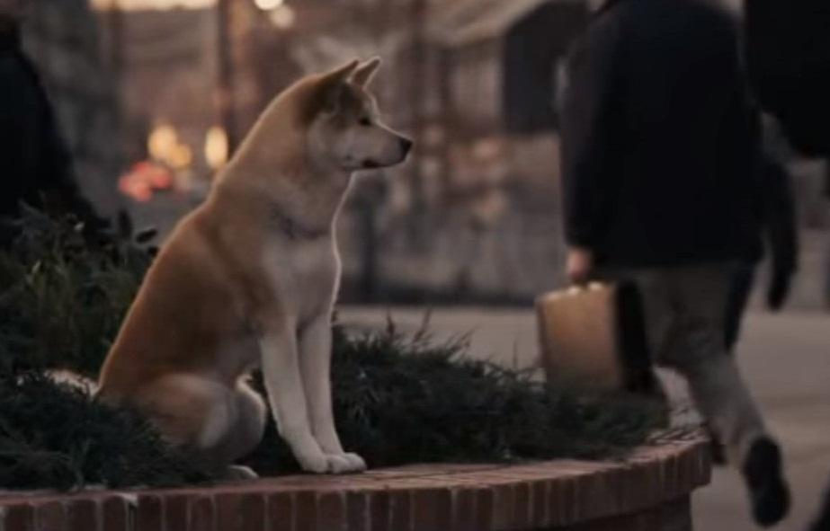 Köpeklerin Duyguları Var Mıdır?