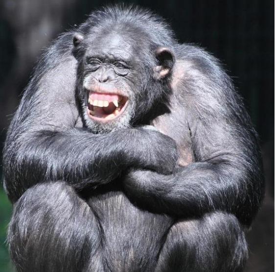 Homo sapiens Maymun Türü