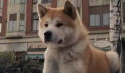 Köpeklerde İştah Kaybının Nedenleri