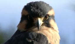 Kuşlar Nereye Gittiklerini Nasıl Görüyor?