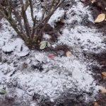Bahçede Odun Külü Nasıl Kullanılır?