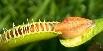 Bitki Ve Böcekler Nasıl Hayvan Yiyorlar
