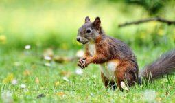 Hangi Hayvanlar Tarlada Yaşıyor?