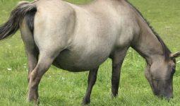 Atlarda Gebelik Süreleri Nasıldır?