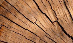 Ağaç Halkalarından İklimi Anlayabilirmiyiz?