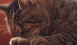 Kediler Muz Yiyebilir Mi?