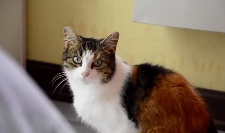 Merak Ettiğiniz İlginç Kedi Bilgileri