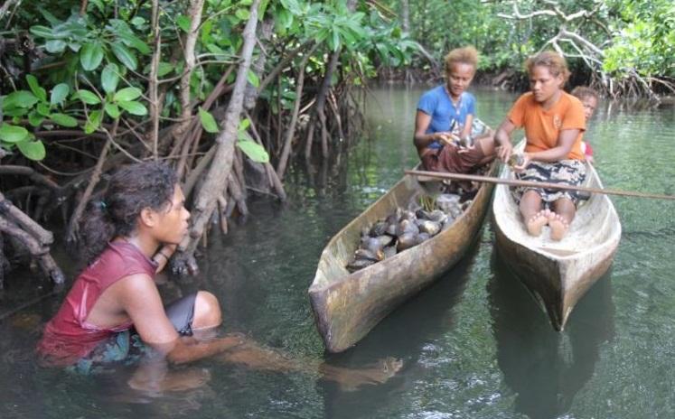 Ekosistemi Mangrov Ağaçları İle Koruyun