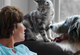 Kedi Mi Köpek Mi Almalıyım?