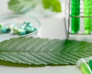 Modern Bitkilerin Önemi
