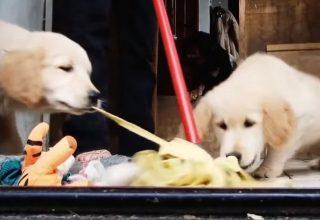 Evcil Hayvanlar için Uygun Sigorta Hangisidir?