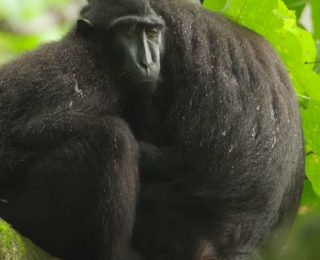 Maymunlar İnsanların Çok Özel Olmadığını Kanıtlıyor.