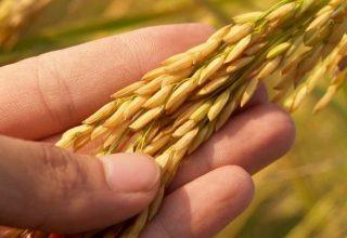 Akıllı Teknolojilerde Tarımın Geleceği