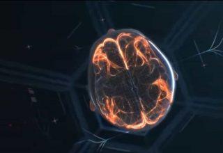 Microglia Bizi Ve Beynimizi Nasıl Korur?