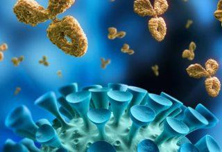 COVID-19′ daki T ve B hücreleri Ne Anlama Geliyor?