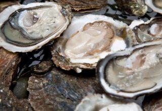 Kabuklu Deniz Ürünleri Vitamin Bakımından Zengin Olabilir?