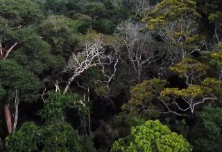 İnsan Faaliyetleri Amazon'u Neden Kurutuyor?