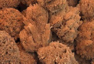 Doğal Deniz Süngerinin Faydaları