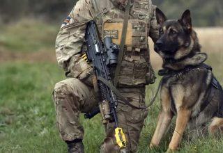 Polis Köpekleri Nasıl Eğitilir?