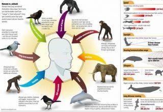 İnsanlar ve Hayvanlar Arasındaki Benzerlikler