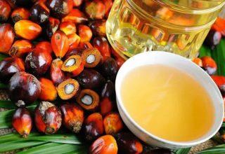 Palmiye Yağı Nedir?